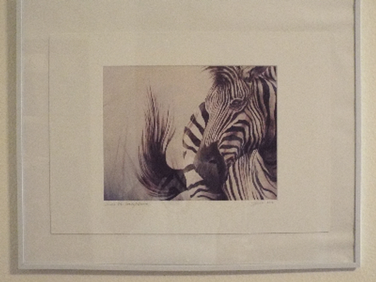 Zebra Professional Signed print by David Small