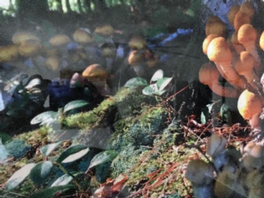 Trio of Yellow Mushroom Villages