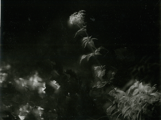 The Philosophers Garden, 2004