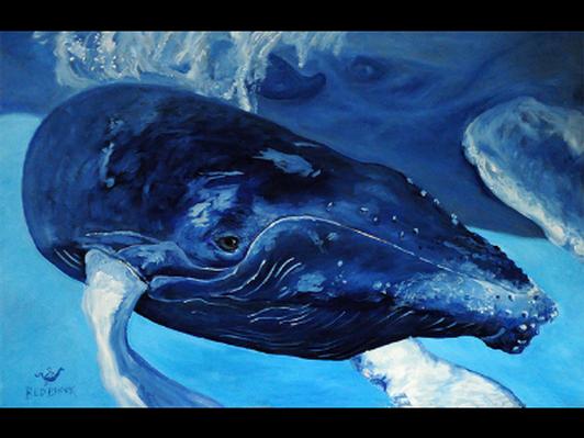 Whale calf - Baleineau