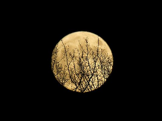Magical Full Moon - Canvas print