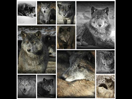 Wolf Creek Habitat Experience