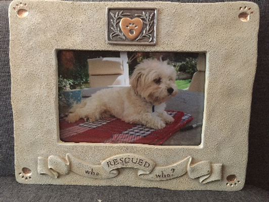 Biddingowl Havanese Angel League Organization For Rescue Auction