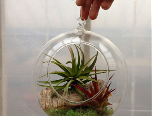 Air Plant Sphere