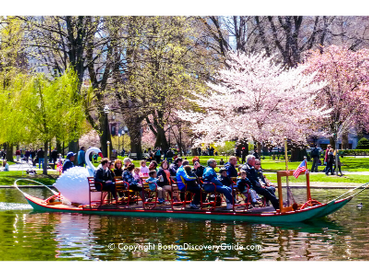Swan Boats (for 10)