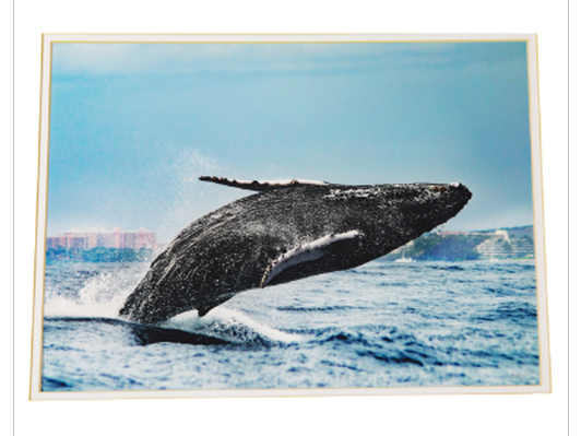 Humpback Whale by Michael Sweet Photography