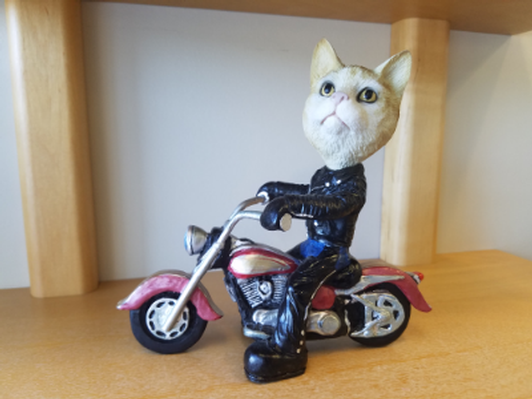 Motorcycle-Riding Kitty