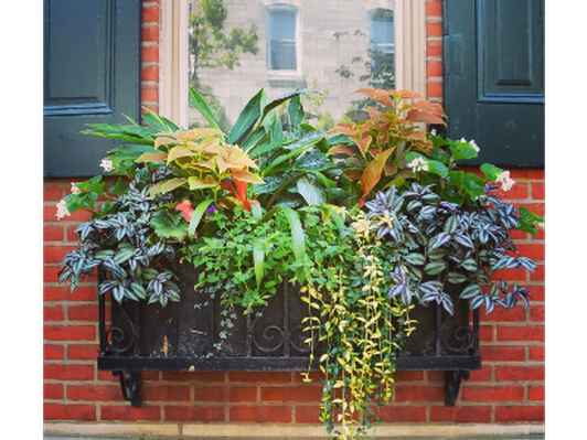 Enliven Planters: In-Home Design Consultation and 1 Season's Arrangement