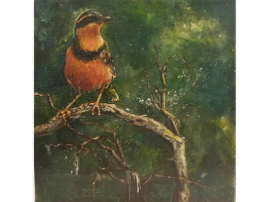 Varied Thrush by Carla Stanley