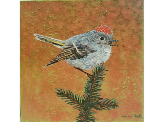 Ruby-crowned Kinglet by Monica O'Keefe