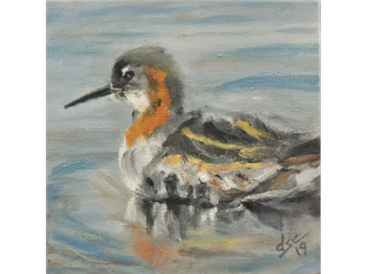 Red-necked Phalarope by Dianne Spence