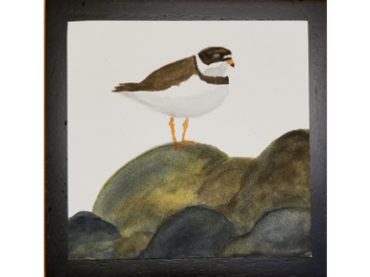 Plover on Rocks by Michelle Michaud