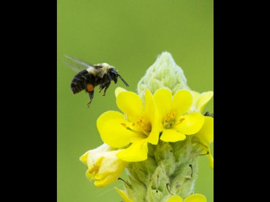 Busy Bee at Wood Lake - Canvas print