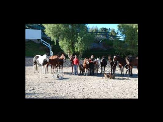 Horseback Riding Lessons - 3 group lessons