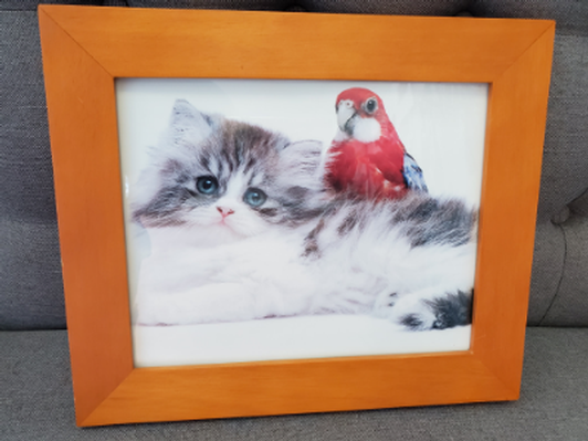 Kitten with Red Parrot in Frame