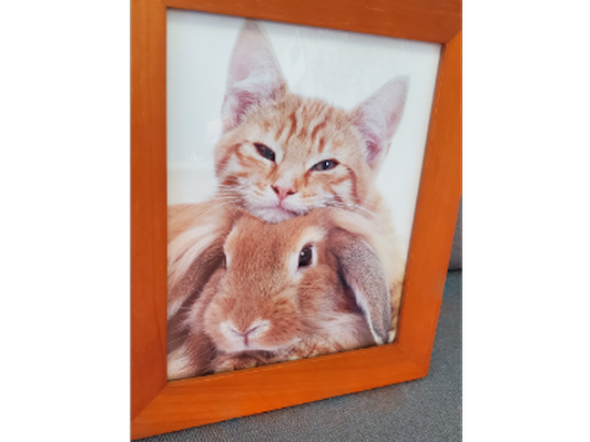 Kitten with Bunny Framed Photo