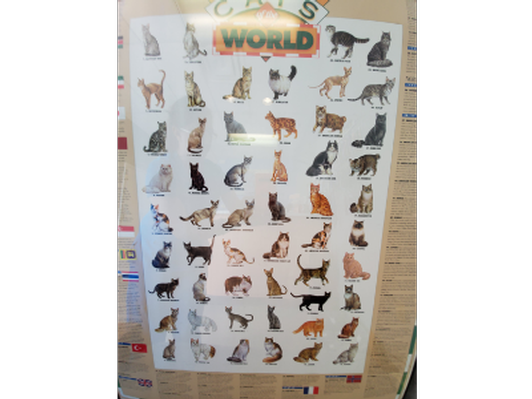 Cats of the World Framed Poster