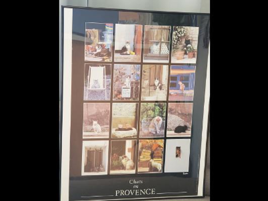 Chats en Provence Framed Poster