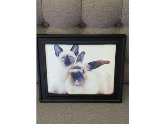 Siamese Kitten with Rabbit in Frame
