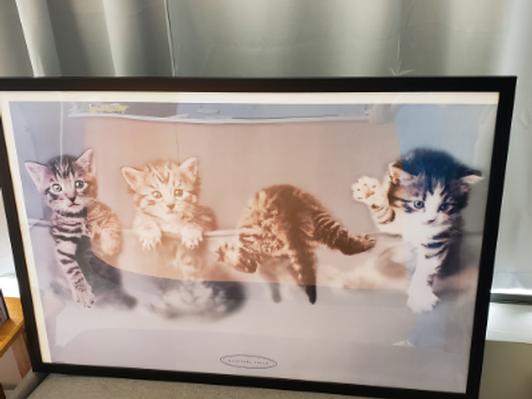 Rachel Hale 4 Kittens Framed Poster