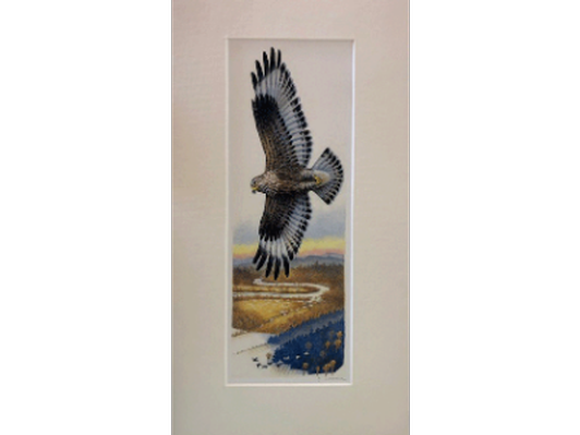 Hawk over the Sheepscot River by Jon Luoma