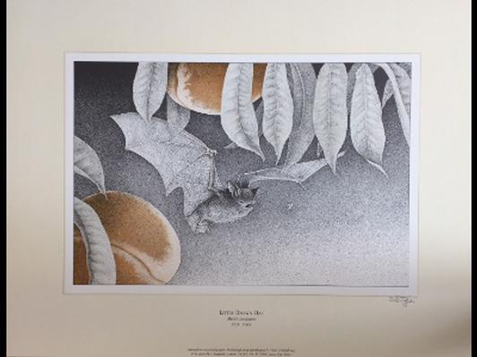 Little Brown Bat by D.D. Tyler