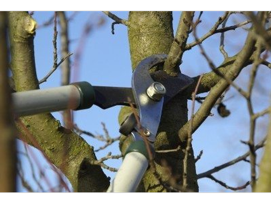 Fruit Tree Pruning - 3 Hours by an Expert!