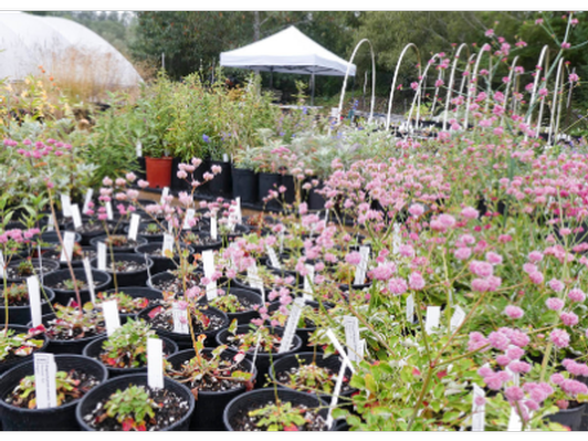 Native Plant Consultation & Plants