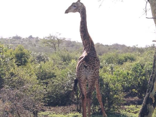South African Safari at Zulu Nyala