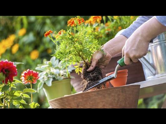 1 hour gardening consultation or gardening work/chores
