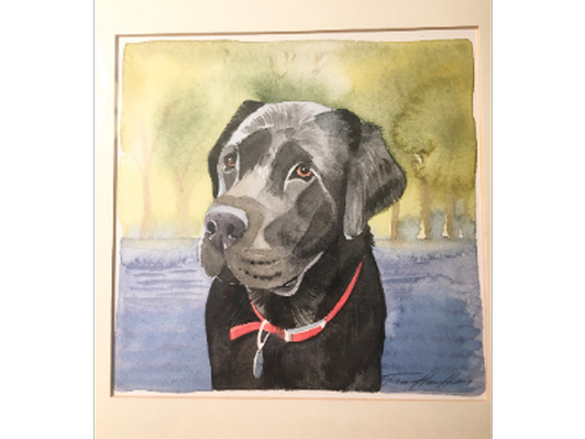 Watercolor of Black Lab by local artist