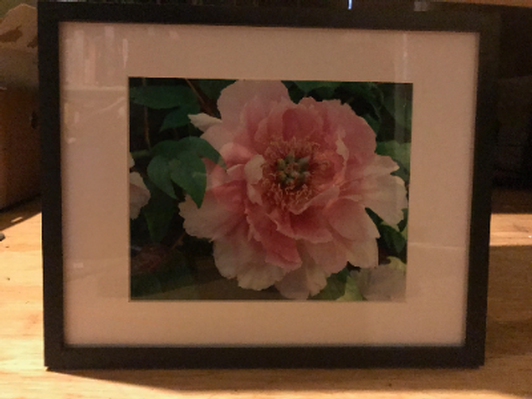 Framed Photo by Vermont Artist Betsy Chapek