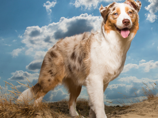 Sun Valley Animal Center rehab, acupuncture, and laser treatment