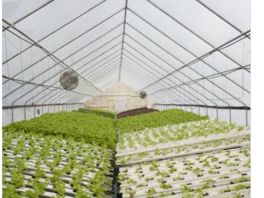 * Just added! Additional Brogue Hydroponics Farm Tour for Four!