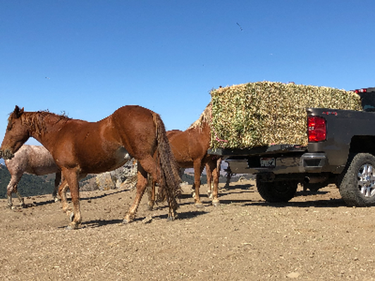 Provide Winter Feed: Hay for 2 months for the herds at San Luis Obispo sanctuary