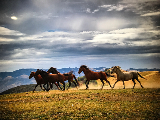 Provide Vet Care for all horses for 1 month