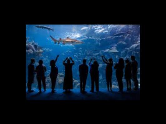2 Tickets to the Florida Aquarium