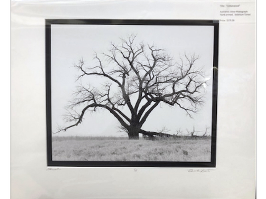 """Cottonwood"" Authentic Silver Photograph"