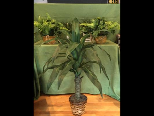 "42"" Dracaena Silk Plant"