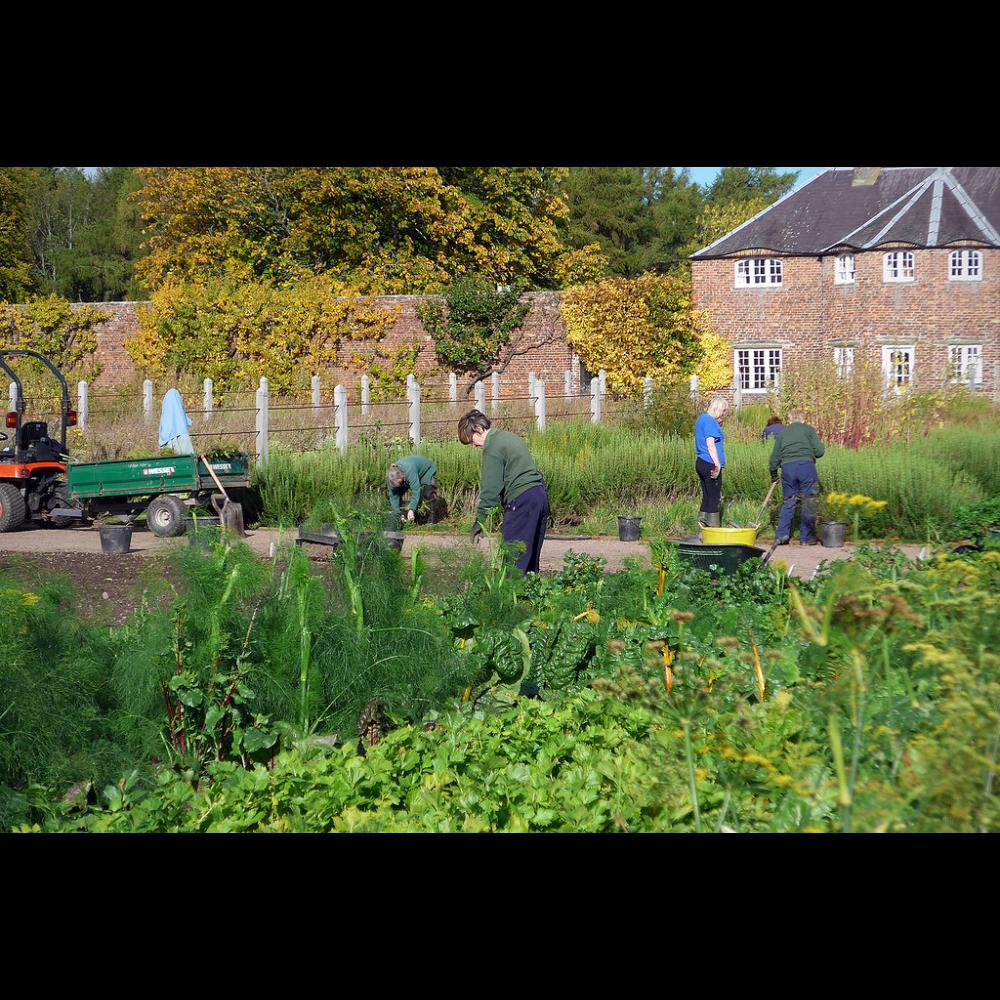 SLT Volunteer Help for your Backyard Project