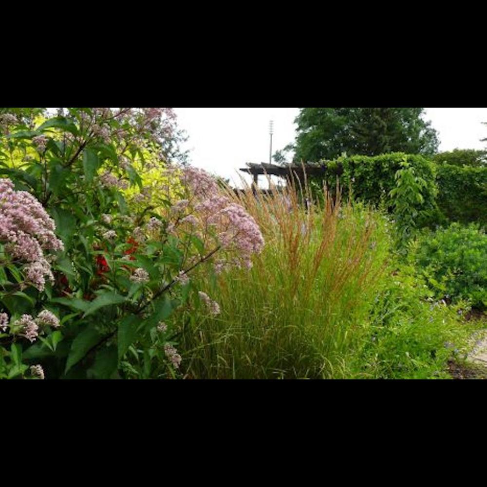 Native Planting Landscape Consultation + Ross & Ross Nursery Gift Card