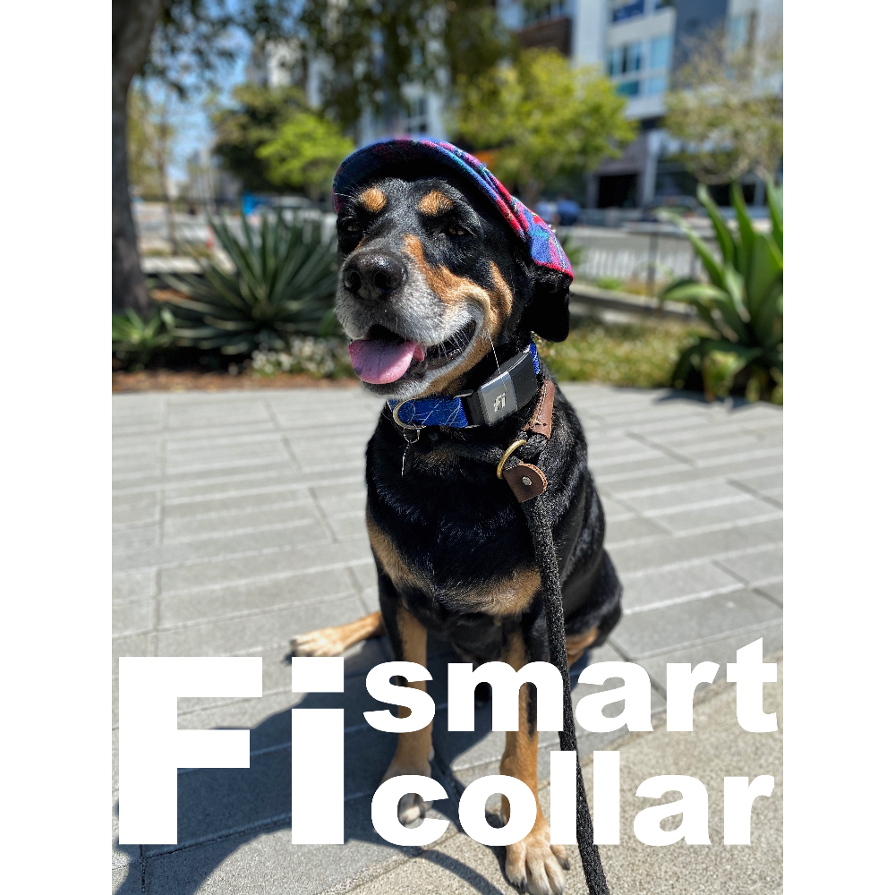 Fi Smart Collar + 1yr Subscription