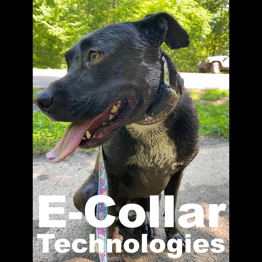 E-collar Technologies Gift Certificate