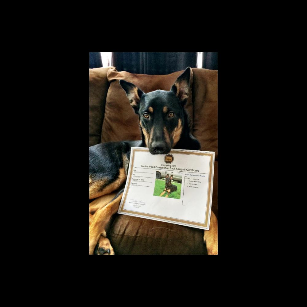 DNA My Dog Kit