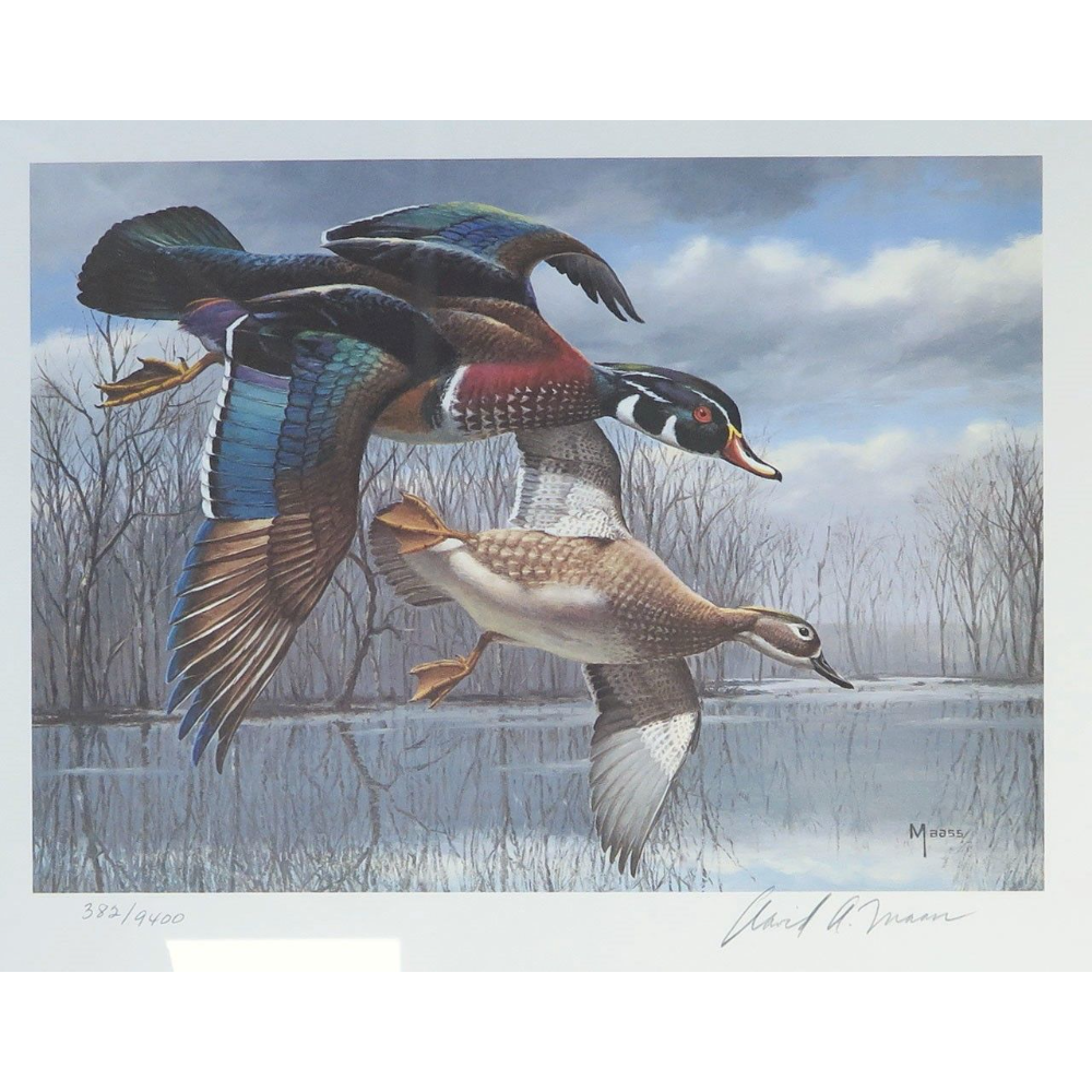 Wood Ducks, by David Maass