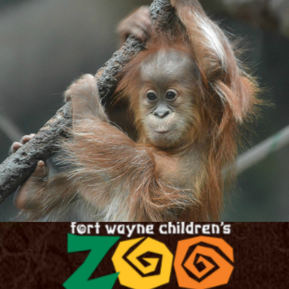 Family Fun at the Zoo