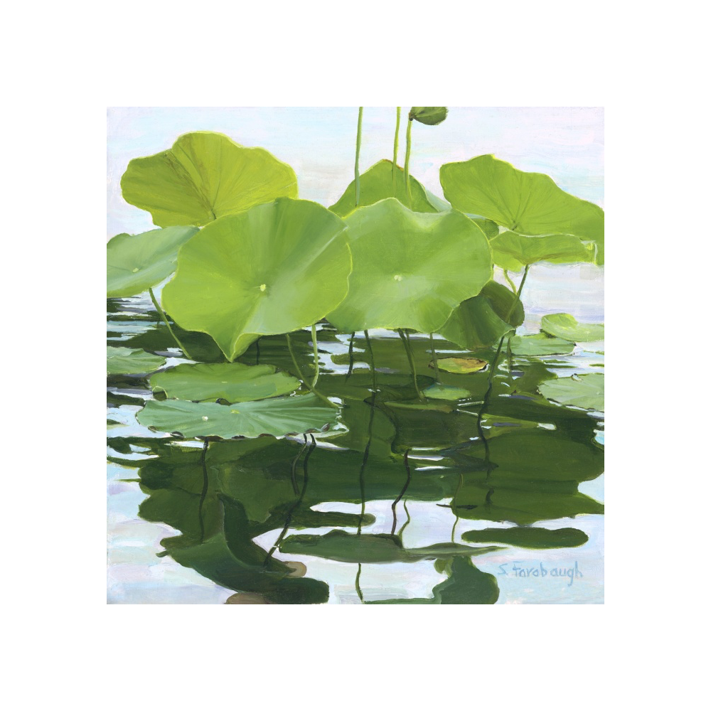Lotus Leaves and Lily Pads   By Sheri Farabaugh