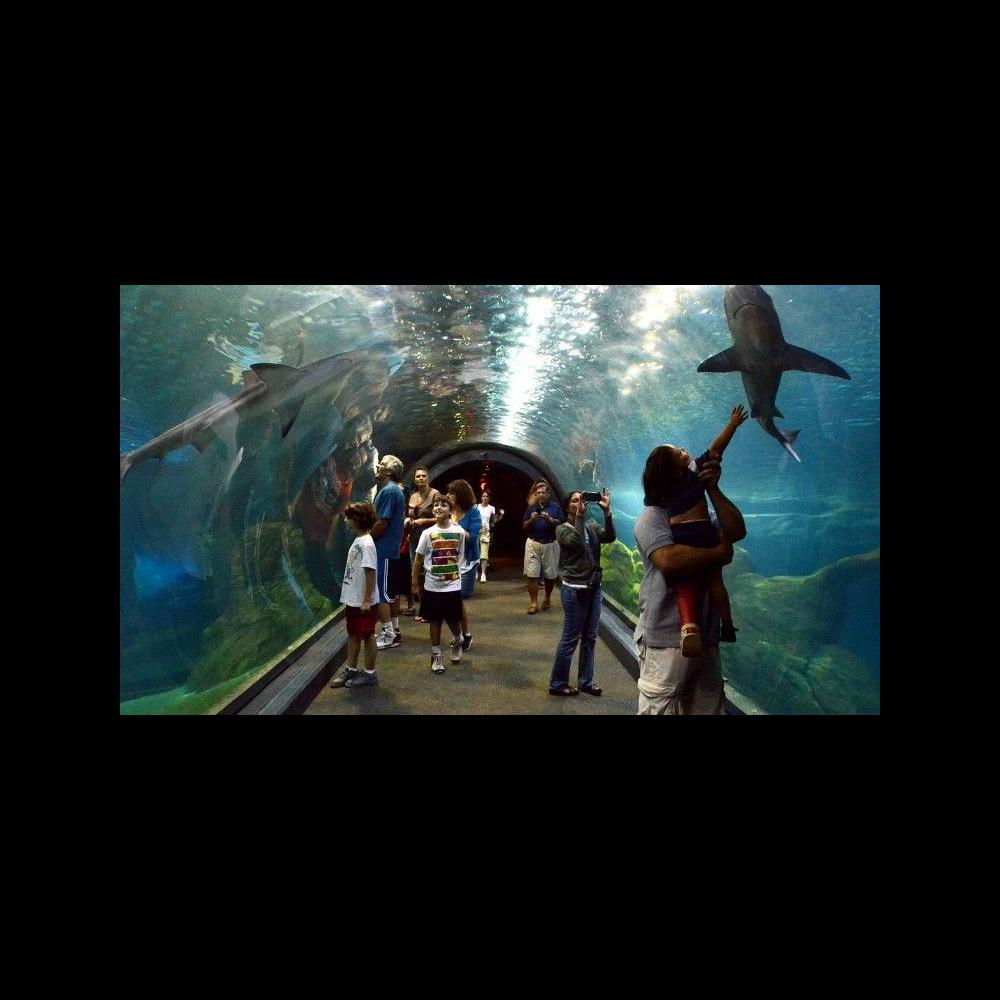NJ Adventure Aquarium