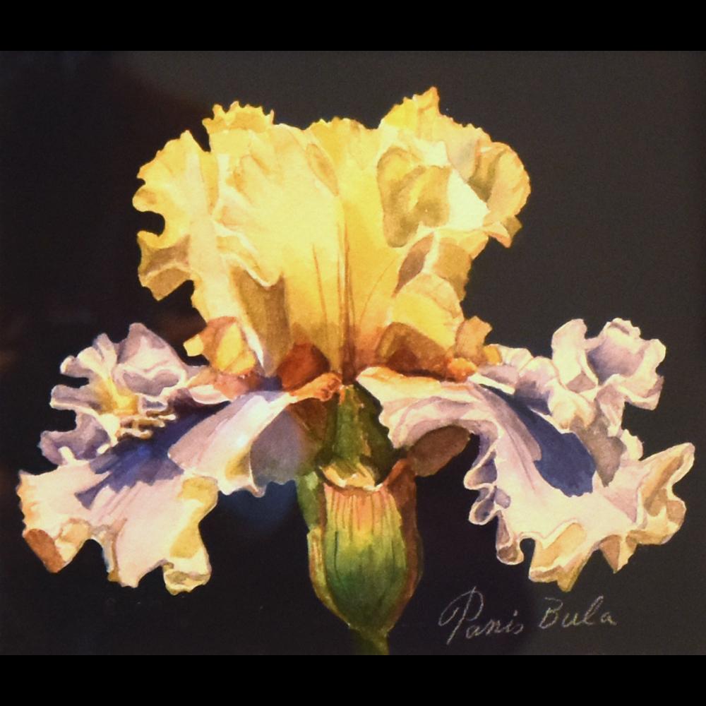 Ruffled Delight I, Yellow Iris