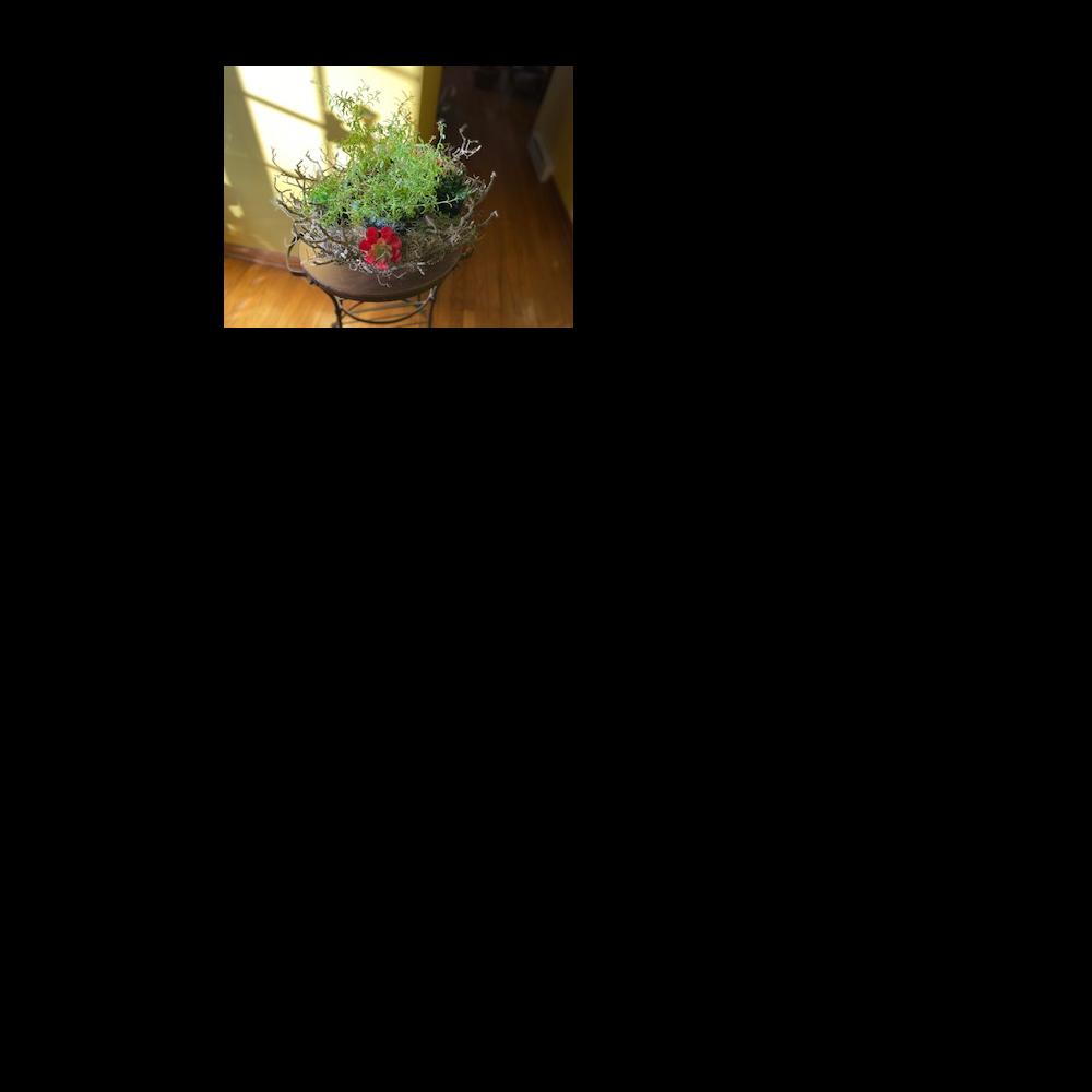 Lavender twig basket